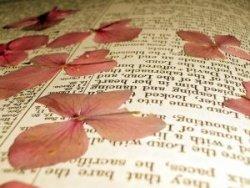 book pressed flowers for handmade wedding invitations